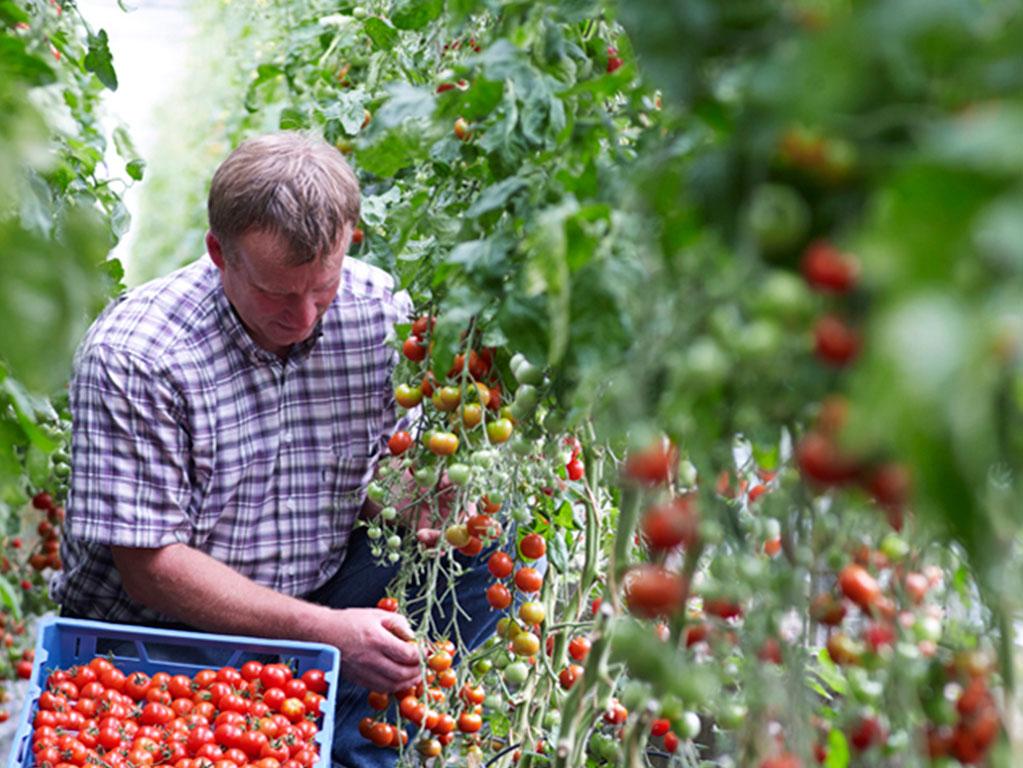 Petkens Gemüseanbau